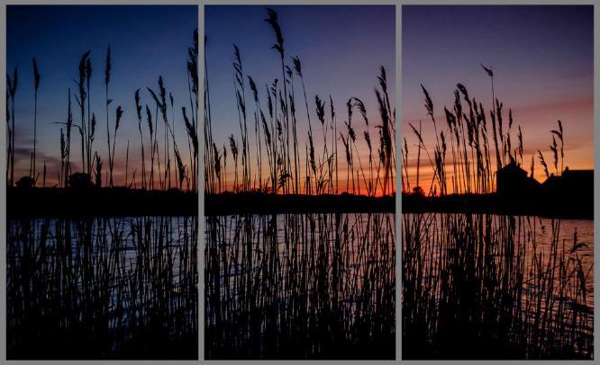 Sunset Through The Reeds - David Weller