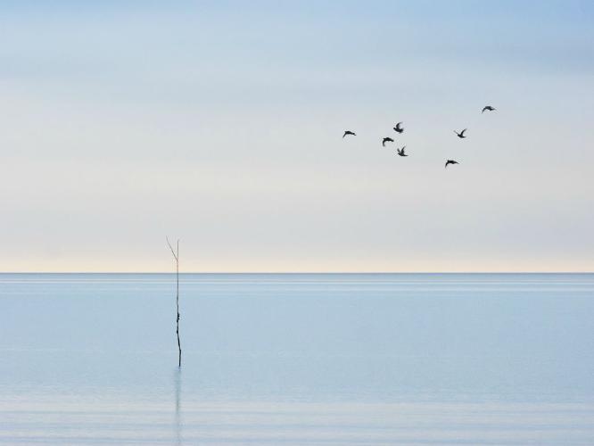 7 Birds and a Withey - Martin Heathcote