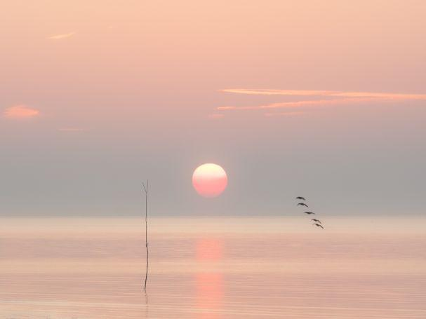 Martin Heathcote - Tranquil Sunrise - Martin Heathcote