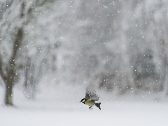 Dashing Through The Snow - Eric Dew