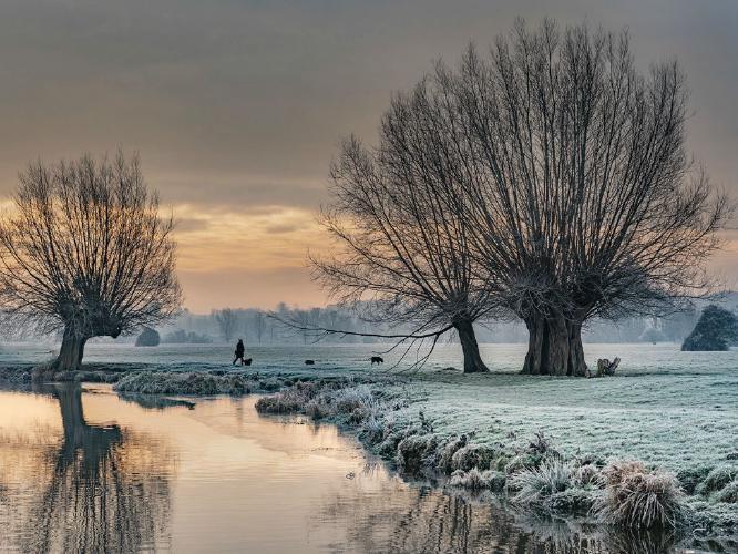 Winter morning dog walk - Colin Brett