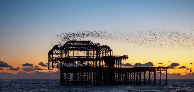 Brighton Murmuration - David Cross