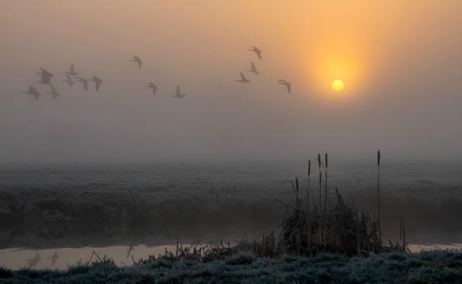 Morning Flight - Jennifer Brett