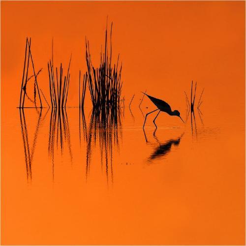 Sunset on the lake - Derek Howes