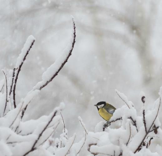 Glimpse of Colour in the Snow - Eric Dew