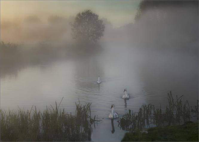 Emerging from the mist - Mary Battye