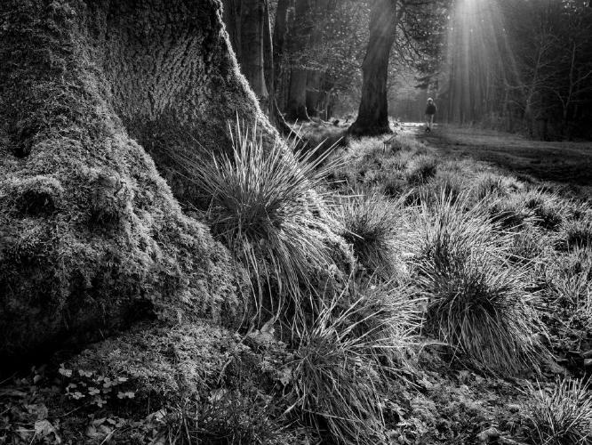 Forest Light - Kate Jackson