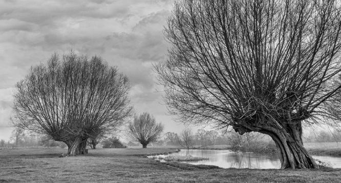 River Stour Dedham - Amit Roy