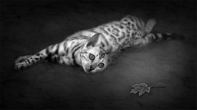 Curiosity - Marcia Mellor
