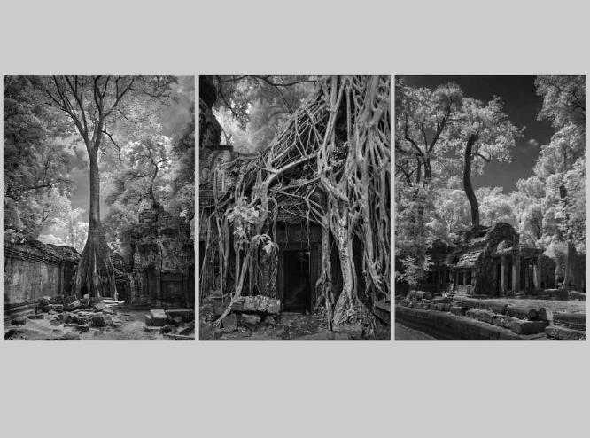 Strangler Tree Angkor Wat - Roy Essery