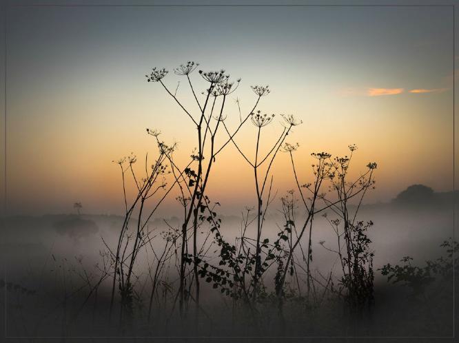 Morning Silhouette - Peter Howard