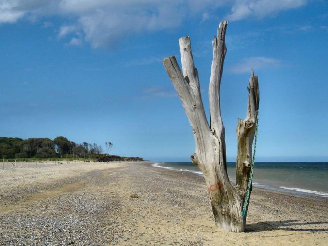 Natural Sculpture - Alison Scott