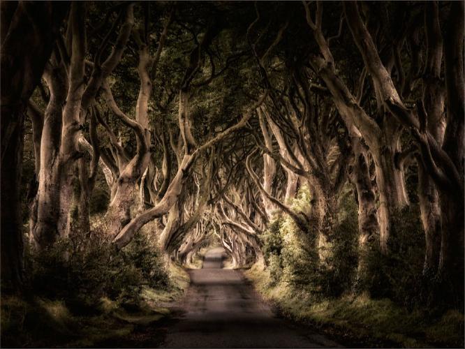 The Dark Hedges - Chris Aldred