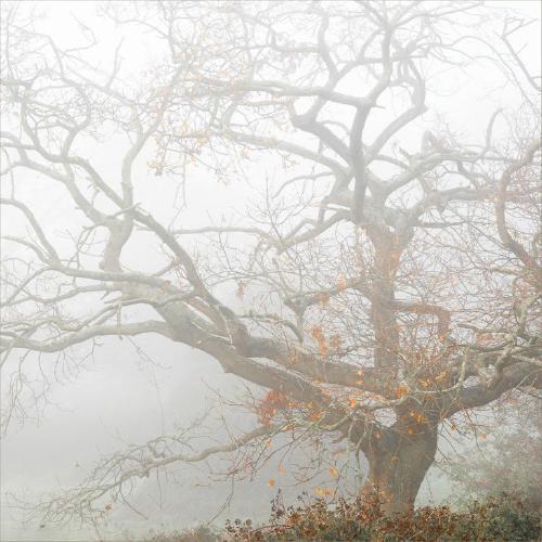 Autumn Hangs On - Chrissie Hart
