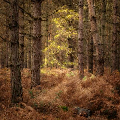 Autumn Light - Chrissie Hart