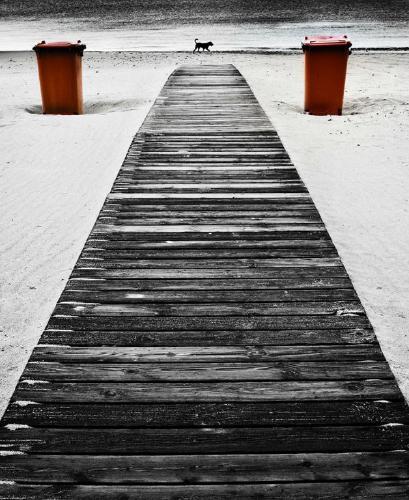 Boardwalk 2 Bins 1 Dog - Chrissie Hart