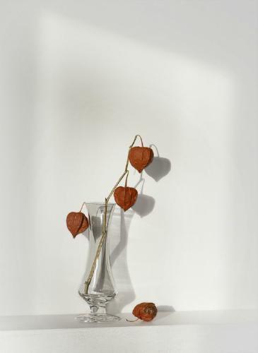 Chinese Lanterns - Chrissie Hart