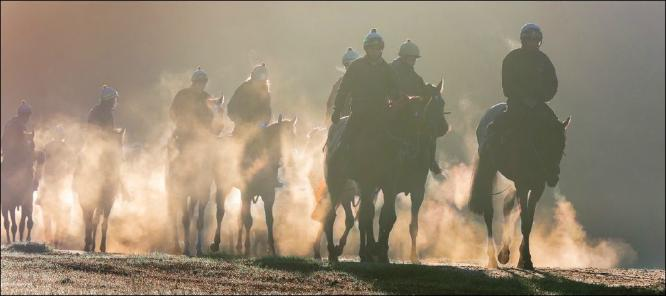 Early morning on the Gallops - Chrissie Hart