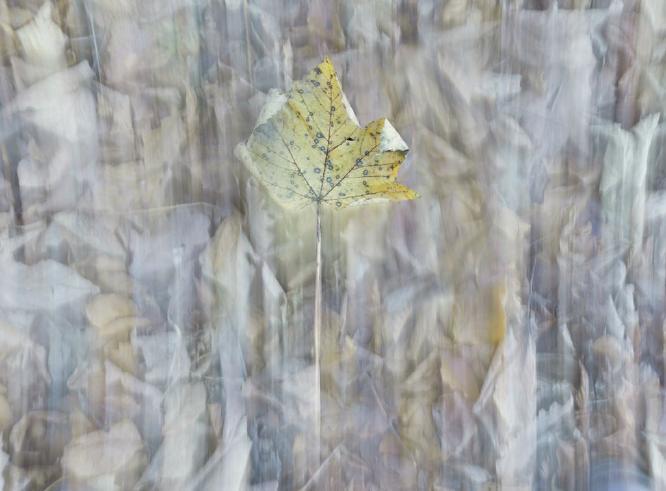 Falling - Chrissie Hart