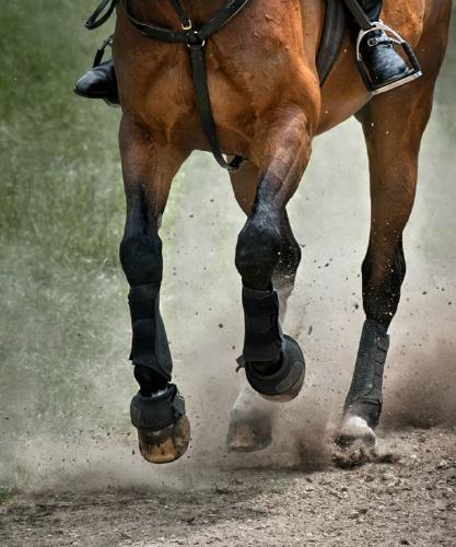 Galloping - Chrissie Hart