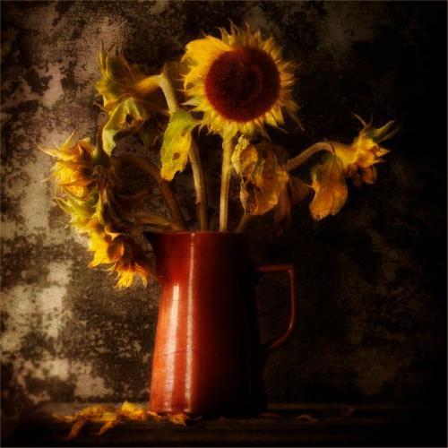Golden Light - Chrissie Hart
