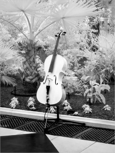 Music Amongst The Palms - Chrissie Hart