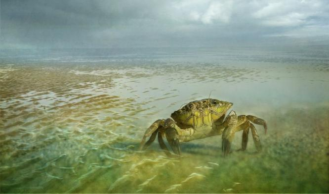 Tides Out - Chrissie Hart