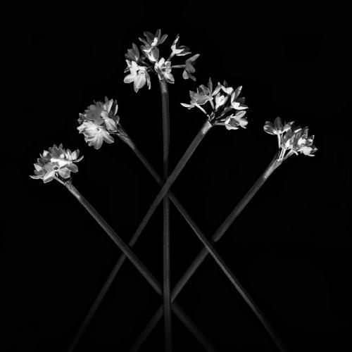 Narcissus - Clifford Sullivan