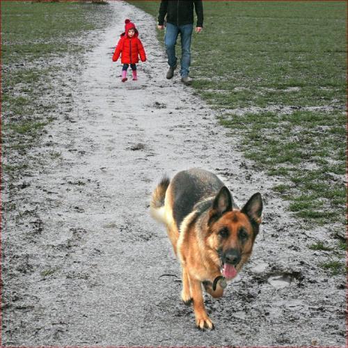 Dog Walkers - Colin Dando
