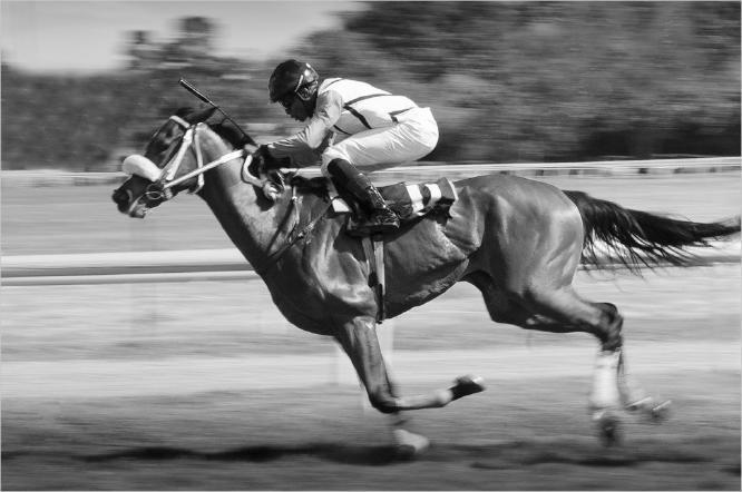 Horsepower - Colin Dando