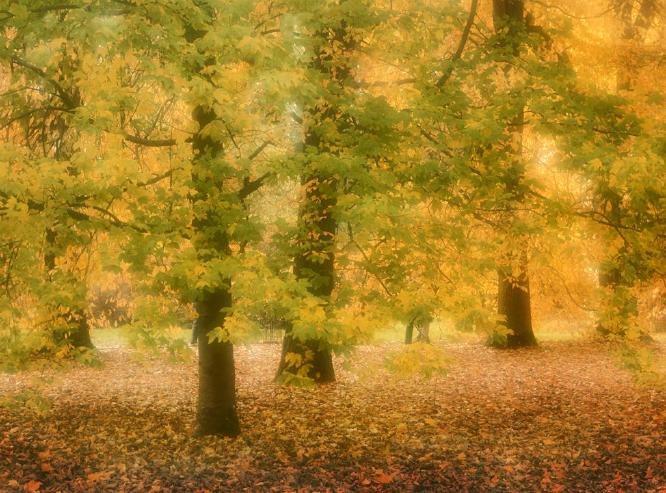 Autumn in the Park - Colin Westgate