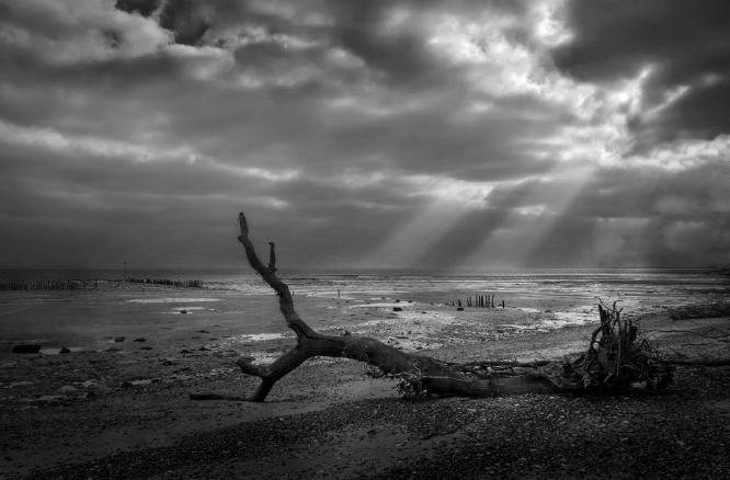 Fallen Tree Mersea Island - 2 - Colin Westgate