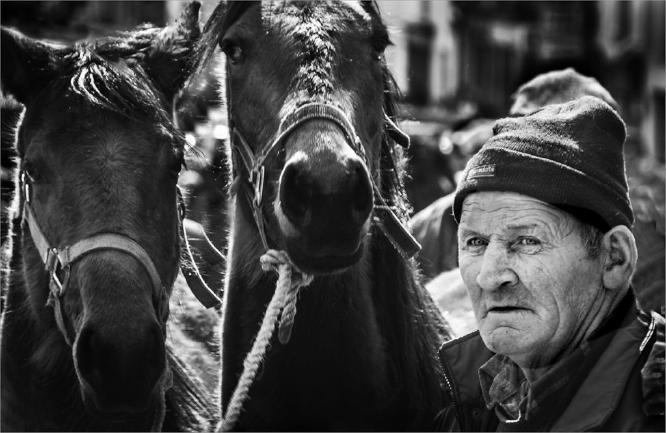 Horse Trader Milltown Ireland - Colin Westgate