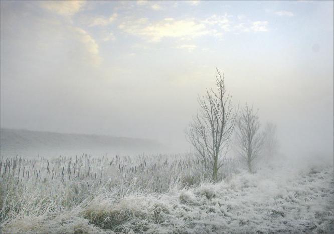 Misty Morning Mersea Island - Colin Westgate
