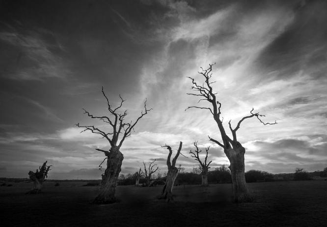 Mundon Oaks - Colin Westgate