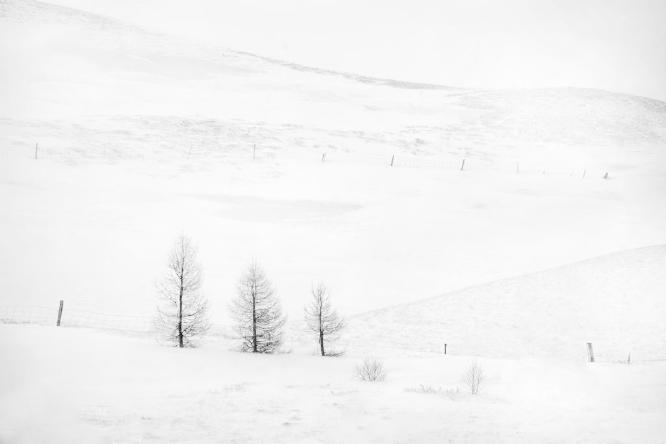Three Trees Iceland - Colin Westgate