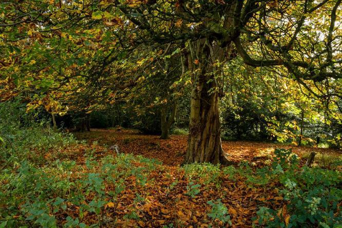 Autumn Colours - David Cross