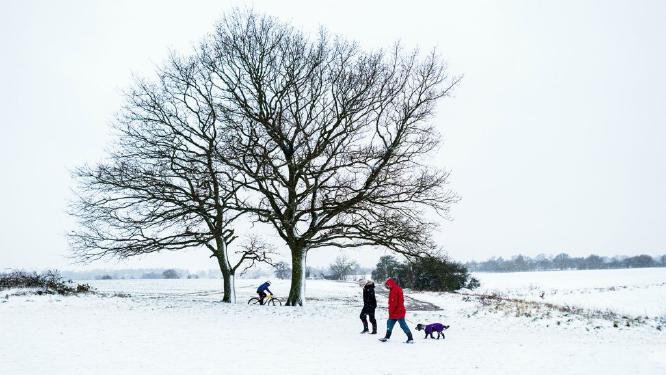 First Snow - David Cross