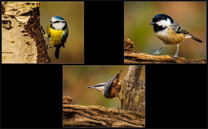 Garden Birds - David Cross