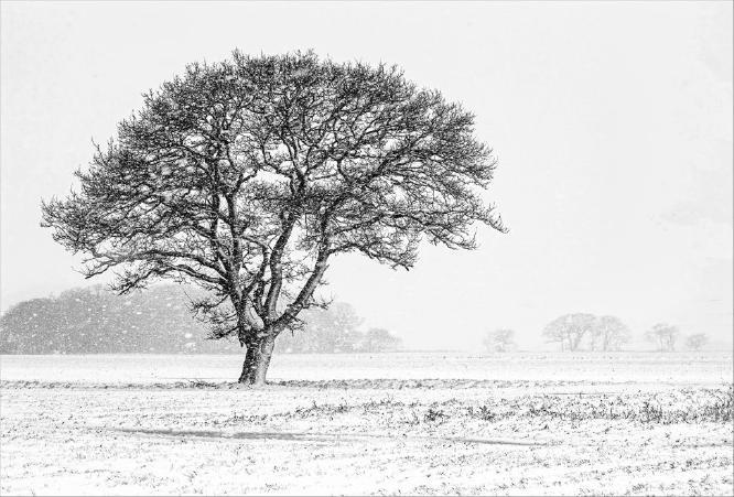 Winter comes to Frinton - David Egerton