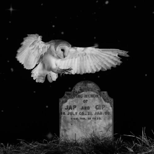 As quiet as the grave - Derek Howes