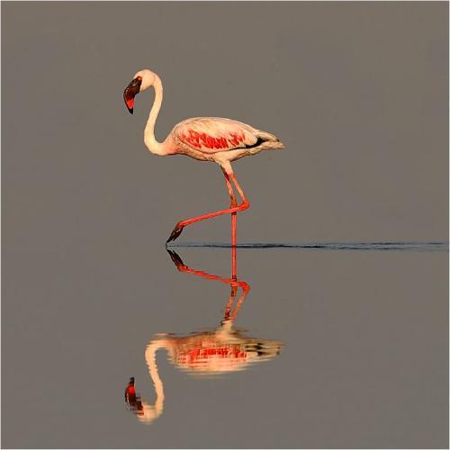Reflection - Derek Howes
