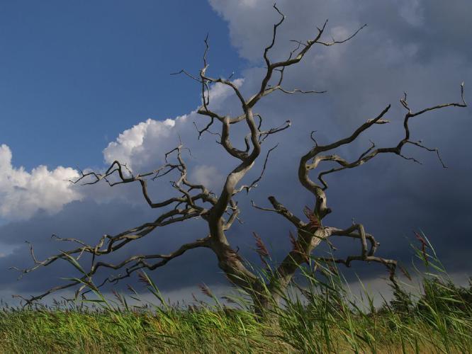 Dead Tree - Jan Cross