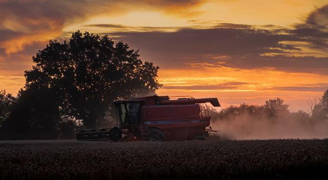 Harvesting at Sunset - Jan Cross