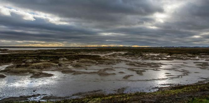 Salt Marsh - Jan Cross