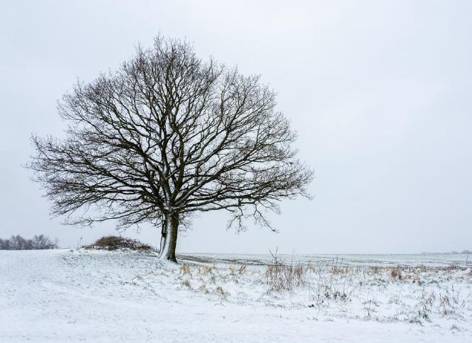 Winter Landscape - Jan Cross