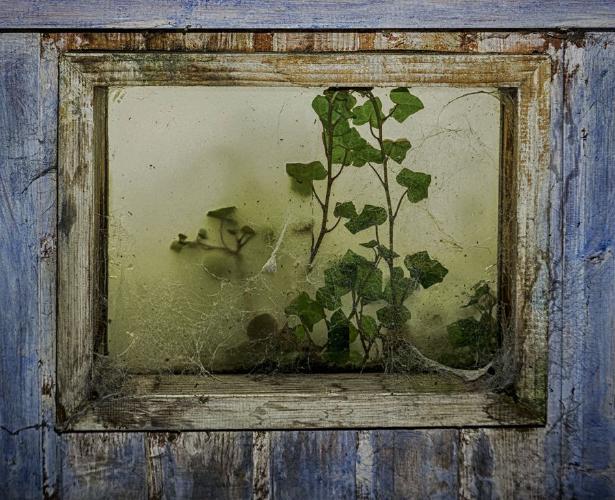 Back to Nature - Jennifer Brett