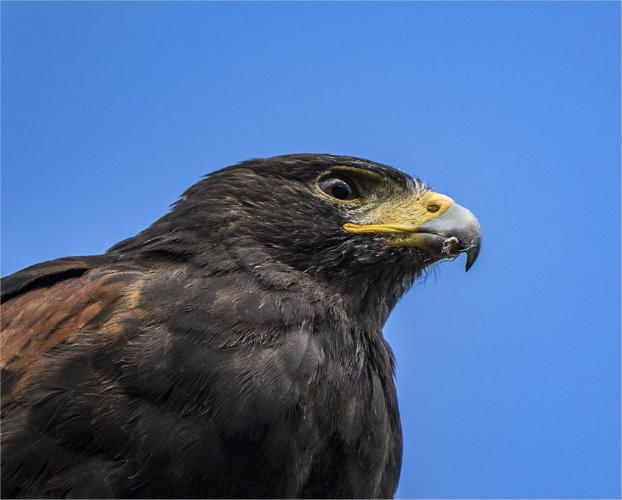 Birds eye view - Jennifer Brett