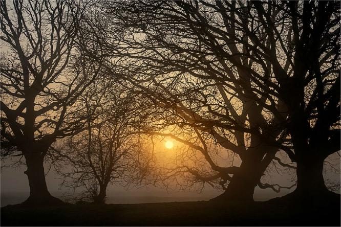 Sunrise through the trees - Jennifer Brett