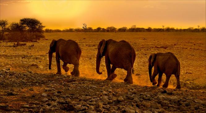 Evening Stroll from the Waterhole - Kate Jackson